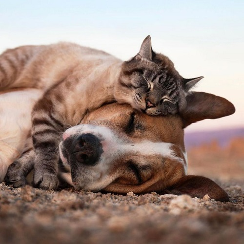 The-perfect-photo-of-a-cat-and-a-dog.jpg