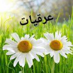 araghiatbama-clickdomain.ir_.jpg